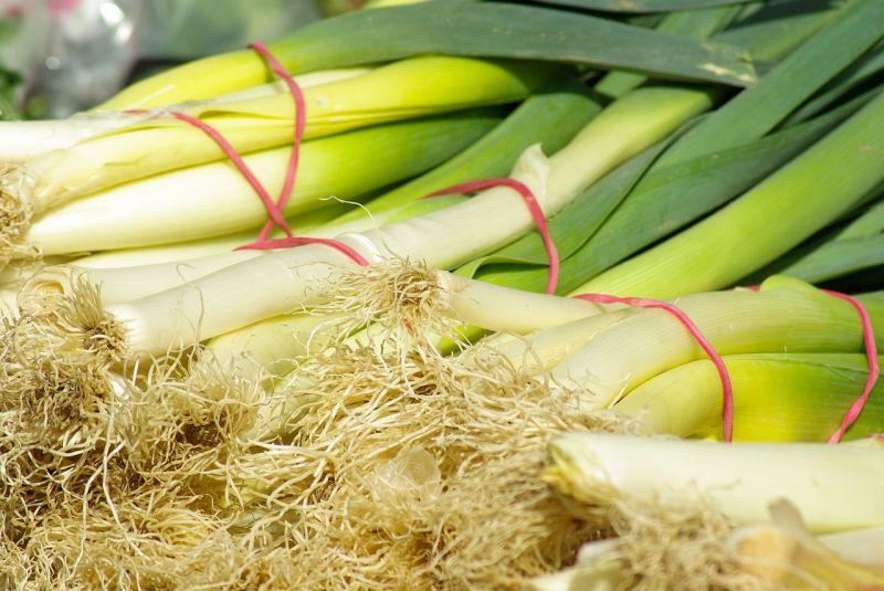 Grossiste en poireaux origine belgique importation fruits et l gumes marseille jeanningros - Poireaux a repiquer vente ...